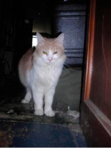 Amber2009