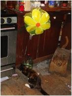 Peri and baloon