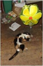 Peri and Baloon4