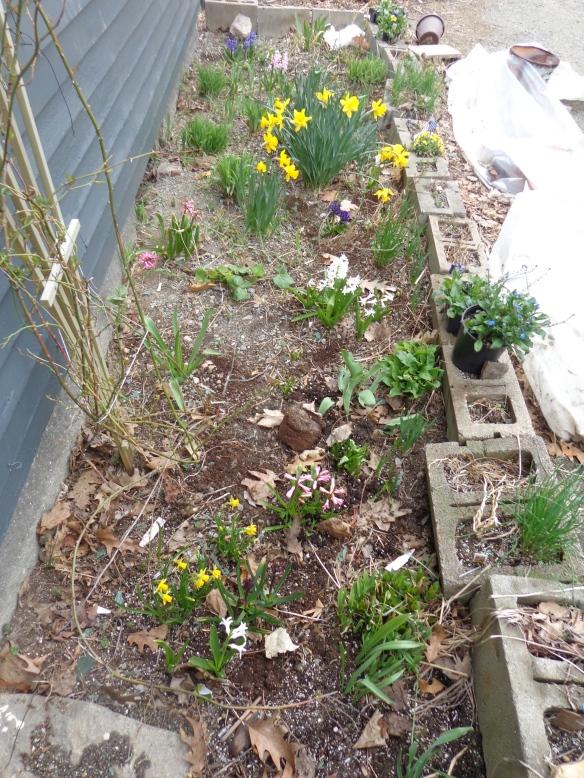 bulbs late april `14