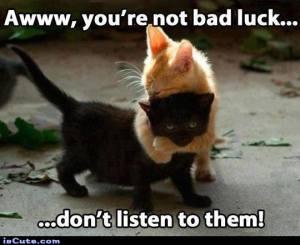 luck kittens