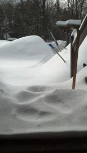 Snow- Marcus